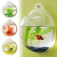 Fish Bubble - Deluxe Acrylic W...