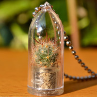 Shining Knight Cactus Plant Live Terrarium Necklace. Nature Jewelry. Variety Chain Selection.