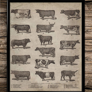 Vintage cow breeds of cattle farm decor farm animal rustic poster cattle decor cow poster breeding home decor kitchen decor print gift retro