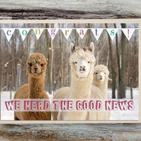 Alpaca Greeting Card - We Herd the Good News