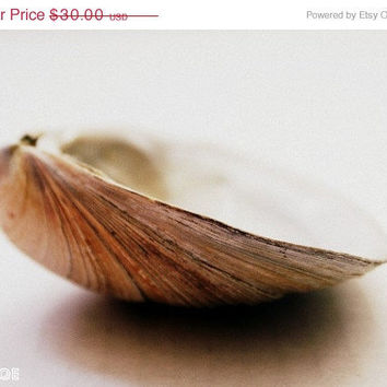 SALE NOW Ends 1/29 Seashell Flip Side 8x10 Photography by thebqe