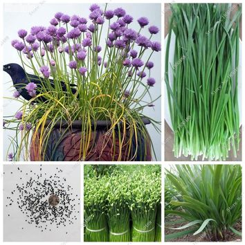 Chive Seeds Leek Flower Seeds Delicious Vegetable Seeds Balcony & Courtyard Kitchen Spices Seeds Natural Growth 50 Pcs
