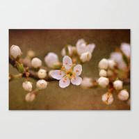 Blossom Stretched Canvas by J Coe Photography