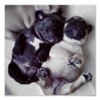 Happy Sleeping Pugs Poster from Zazzle.com