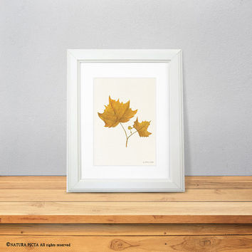 Maple leaf print-leaf print-watercolor maple leaf print-fall print-autumn print-nature art-botanical print-home decor- NATURA PICTA-NPWP08