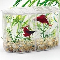 Lees Aquarium Betta Hex - Dual