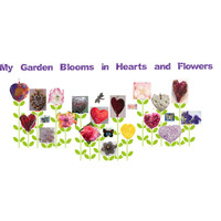 My Garden Blooms in Hearts and Flowers